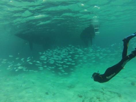peces bajo el barco con snorkel y submarinismo en Ibiza