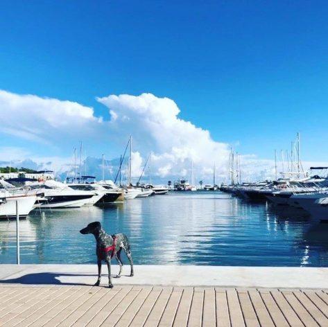 Marina Santa Eulalia apta para todo tipo de público