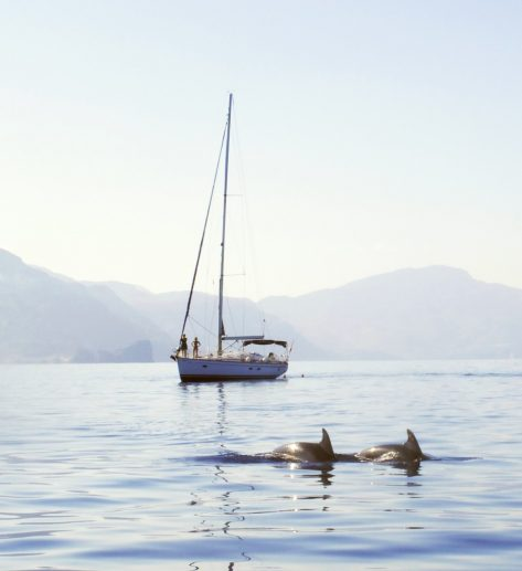 Bavaria 50 en Palma navegando con delfines