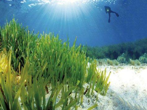 Praderas oceanicas
