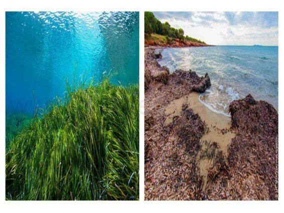 Antes y despues de la posidonea oceanica